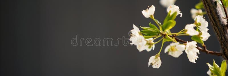 Árbol en flor de la primavera imagenes de archivo