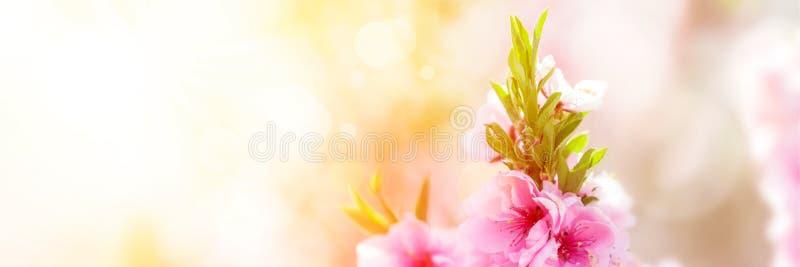 Árbol en flor de la primavera foto de archivo libre de regalías