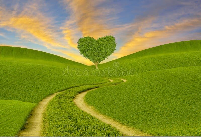 árbol en forma de corazón verde en un prado de la primavera, manera a través de los campos al corazón fotos de archivo