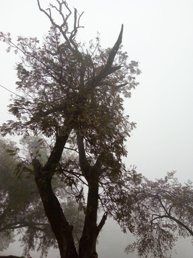Árbol en invierno fotos de archivo libres de regalías
