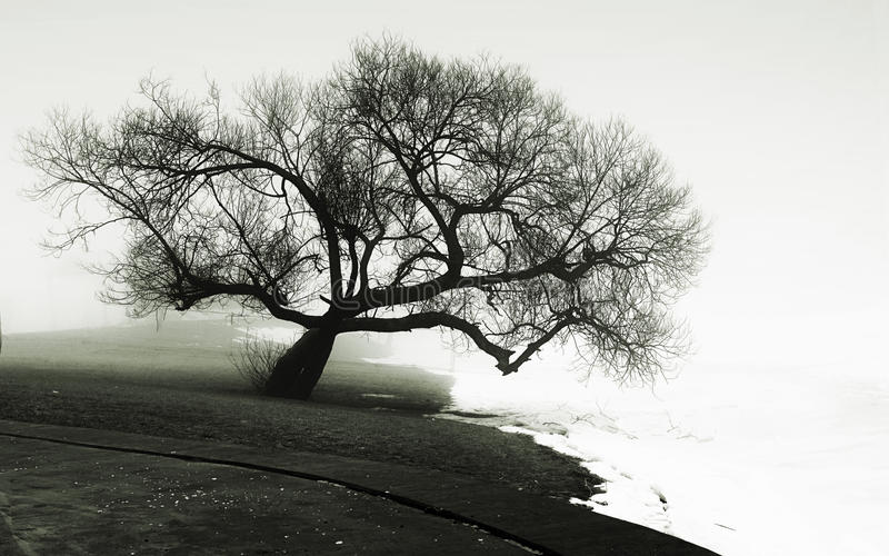 Árbol en la batería de río fotografía de archivo libre de regalías