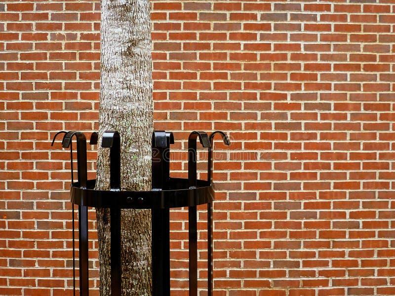 Árbol en la ciudad - naturaleza urbana imagen de archivo