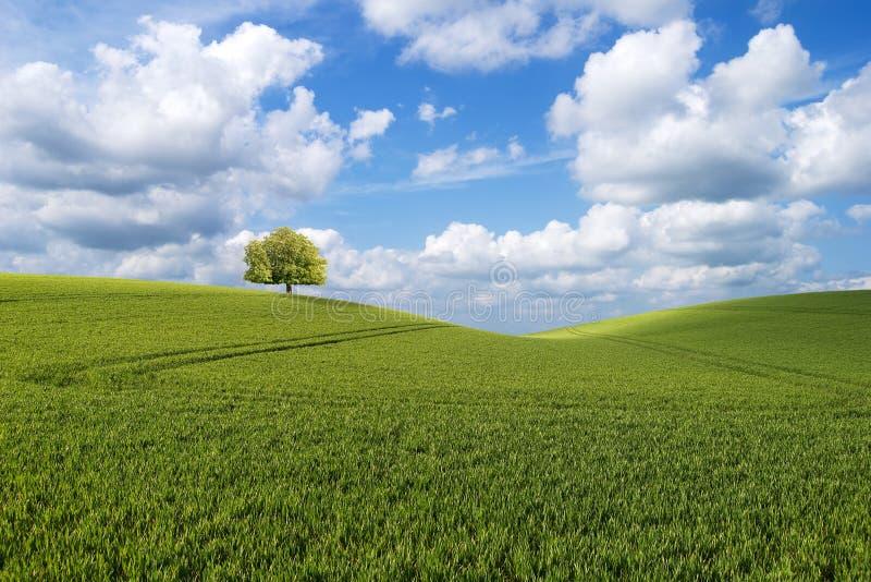Árbol en la colina imágenes de archivo libres de regalías