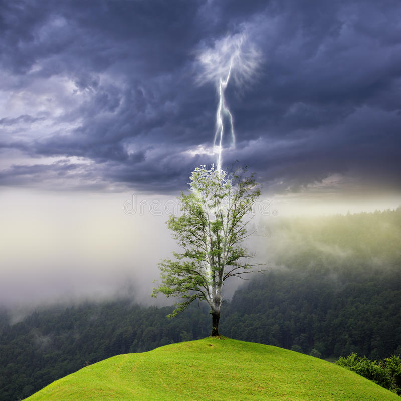Árbol en la colina pegada por el relámpago fotografía de archivo libre de regalías