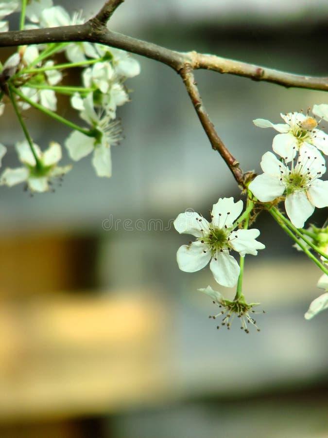 Árbol en la floración fotos de archivo