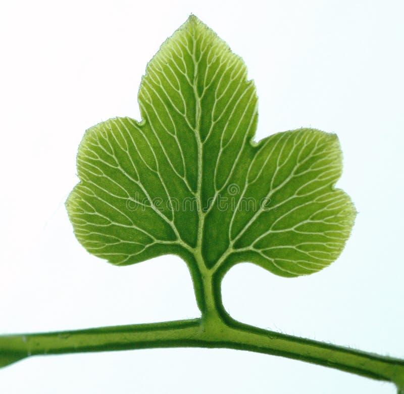 Árbol en la hoja