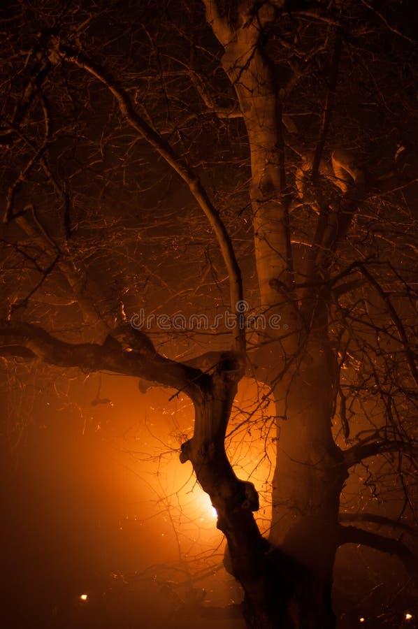 Árbol en la luz foto de archivo libre de regalías