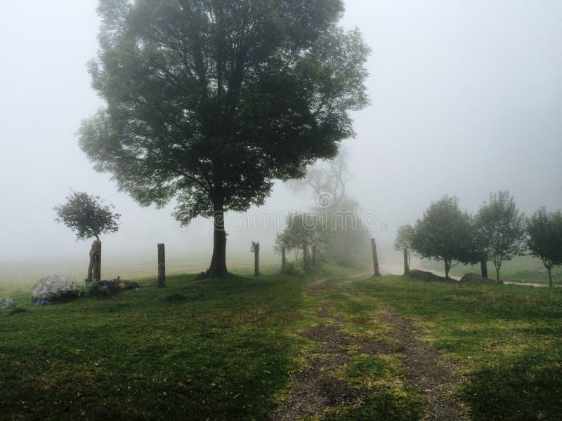 Árbol en la niebla imagenes de archivo