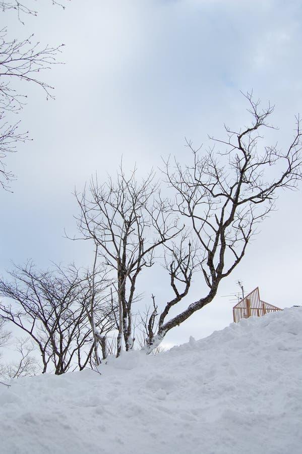 Árbol en la nieve foto de archivo libre de regalías