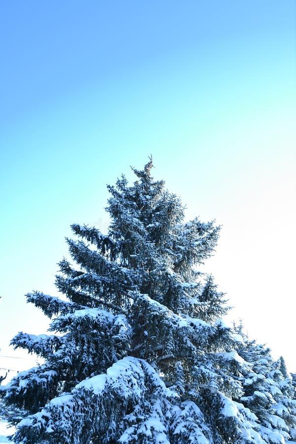 Árbol en la nieve del invierno foto de archivo libre de regalías