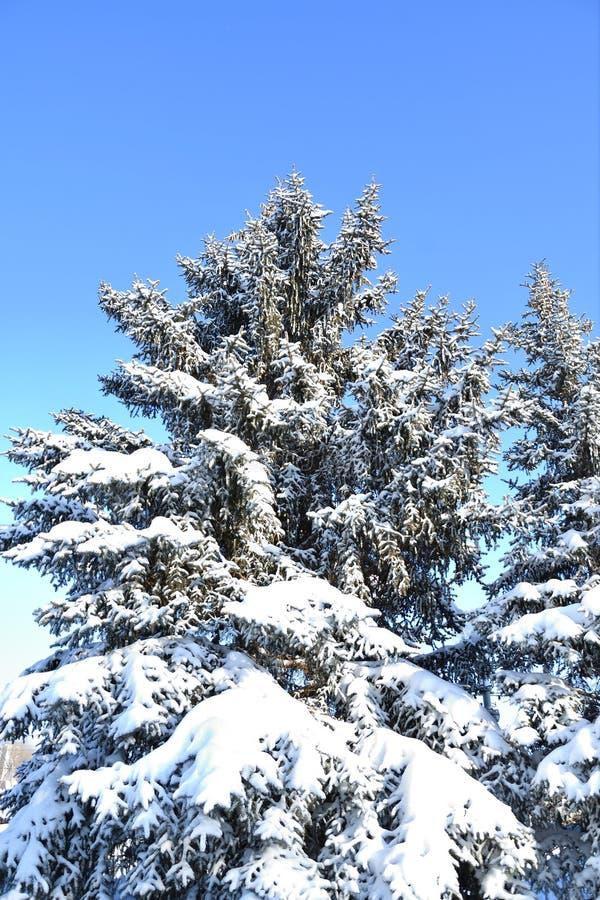 Árbol en la nieve del invierno fotos de archivo libres de regalías