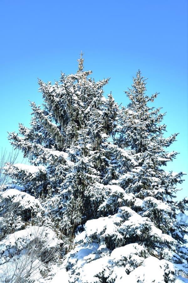 Árbol en la nieve del invierno fotografía de archivo