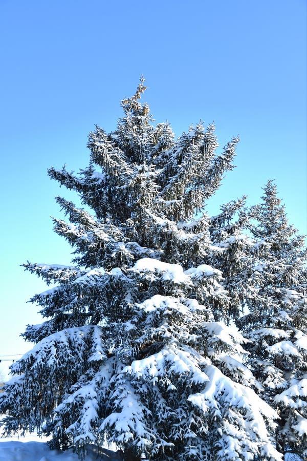Árbol en la nieve del invierno foto de archivo