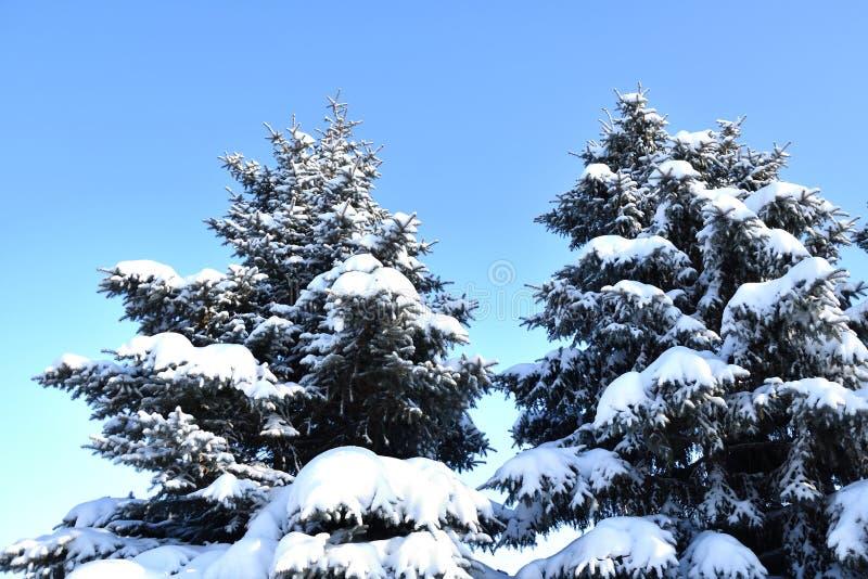 Árbol en la nieve del invierno imagenes de archivo
