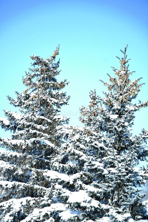 Árbol en la nieve del invierno imagen de archivo