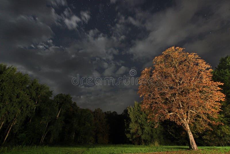 Árbol en la noche, cielo nocturno hermoso de Utumn fotos de archivo libres de regalías