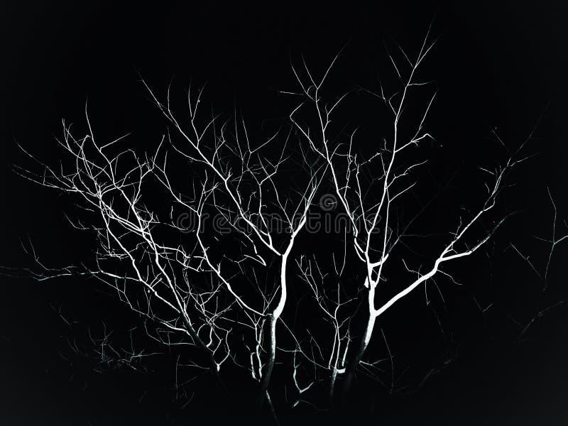 Árbol en la oscuridad foto de archivo libre de regalías