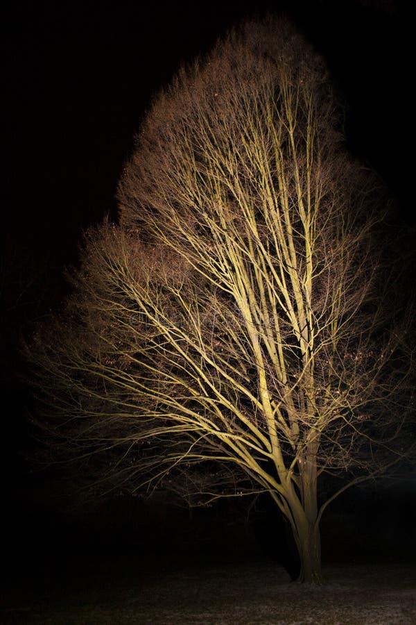 Árbol en la oscuridad iluminada por la luz imagen de archivo libre de regalías