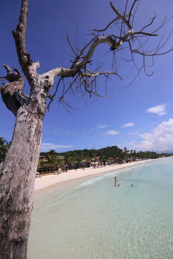 Árbol en la playa blanca imagenes de archivo