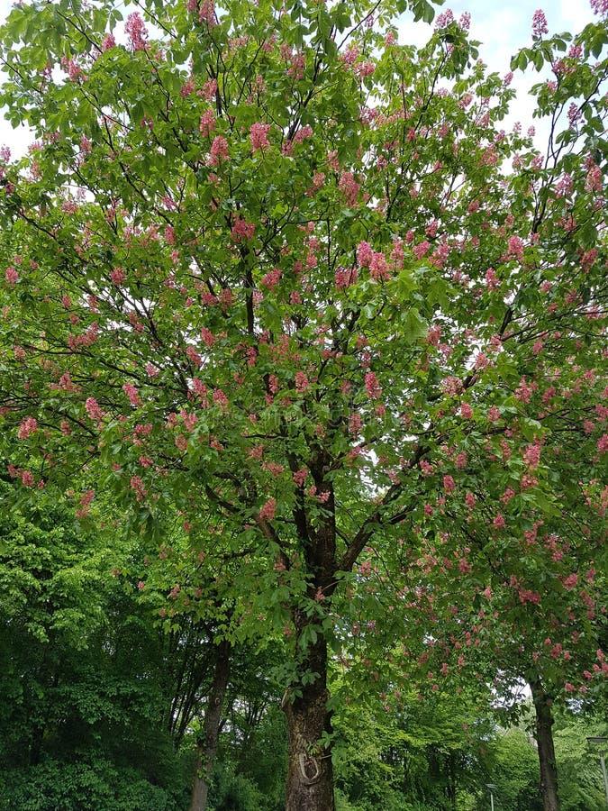 Árbol en la primavera imagenes de archivo
