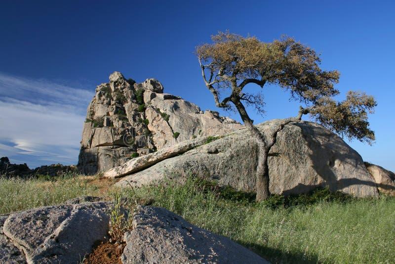 Árbol en la roca fotografía de archivo