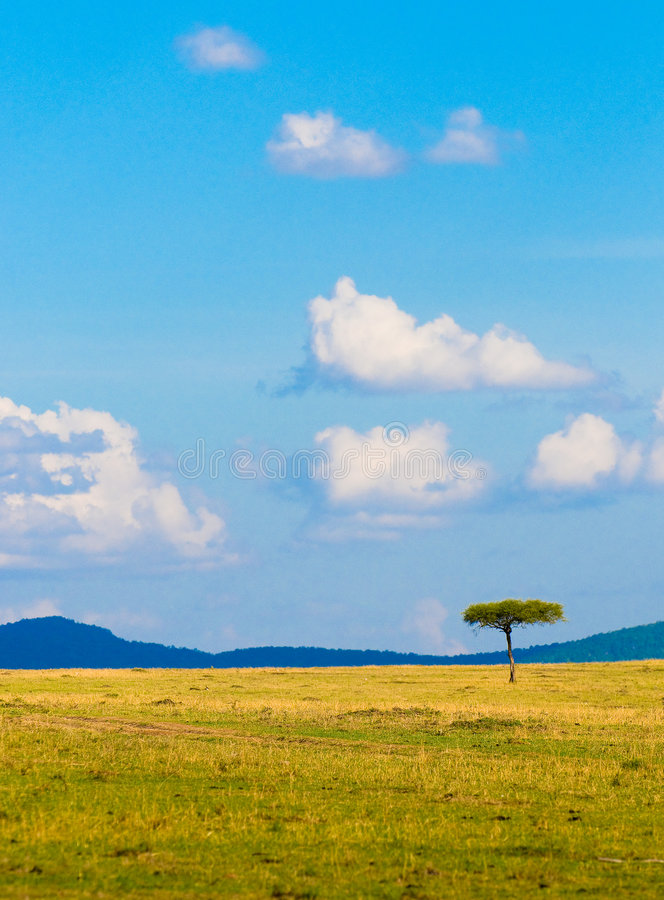 Árbol en la sabana, paisaje africano típico fotografía de archivo