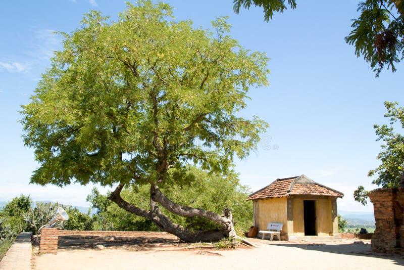 Árbol en la torre de Garai - Phan llamó a Viet Nam fotos de archivo