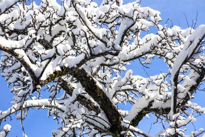 Árbol en las montañas en la nieve imagen de archivo