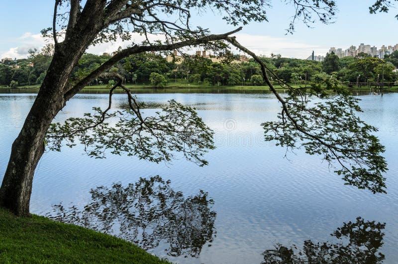 Árbol en las orillas del lago que se inclina sobre el agua y que hace la reflexión fotos de archivo libres de regalías