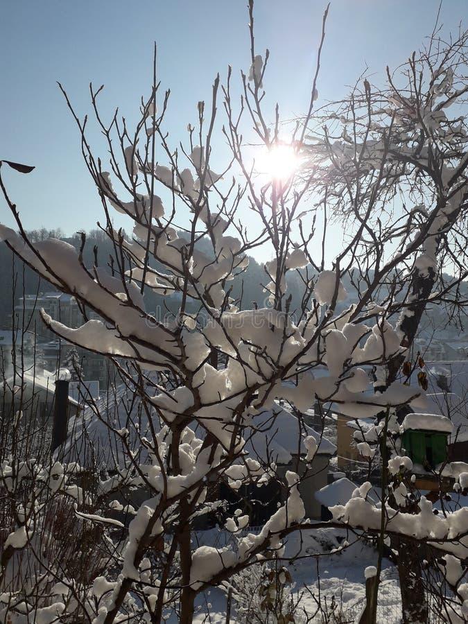 Árbol en mi jardín orgánico nevoso imagen de archivo libre de regalías