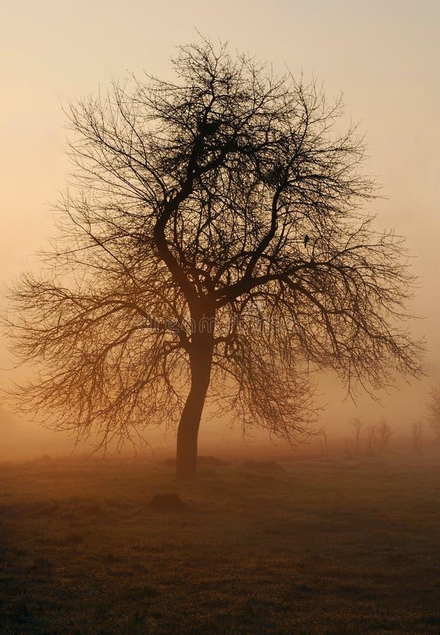 Árbol en niebla imagen de archivo
