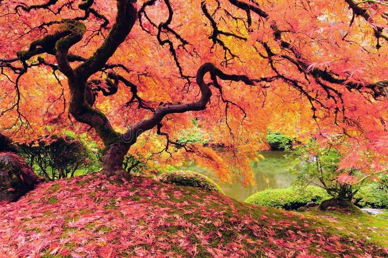 Árbol en otoño imagen de archivo