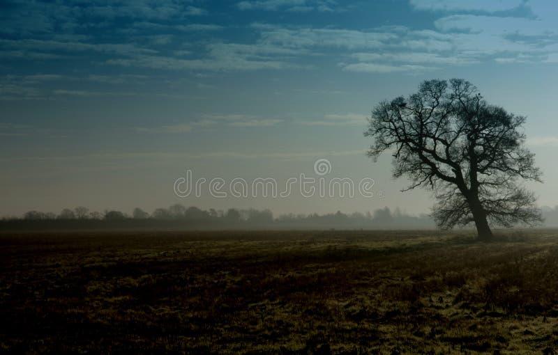 Árbol en paisaje imágenes de archivo libres de regalías