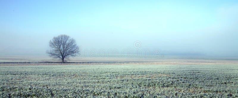 Árbol en paisaje congelado fotografía de archivo
