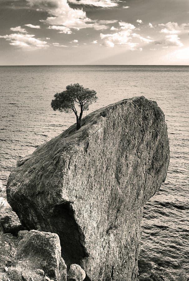 Árbol en roca foto de archivo libre de regalías
