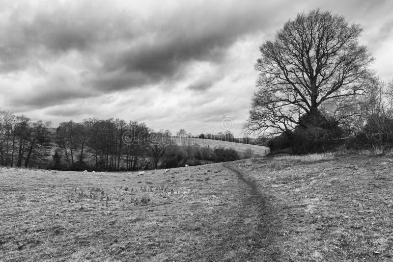 Árbol en un campo al lado de una trayectoria que camina foto de archivo