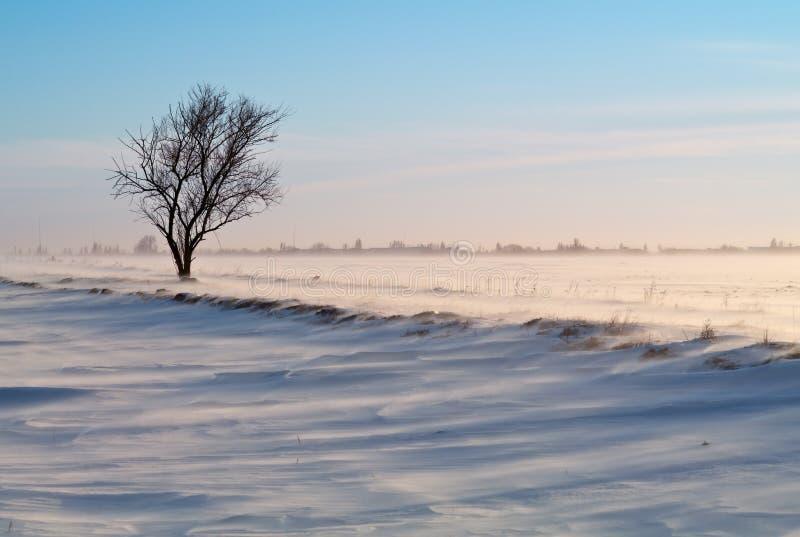 Árbol en un campo nevado fotos de archivo