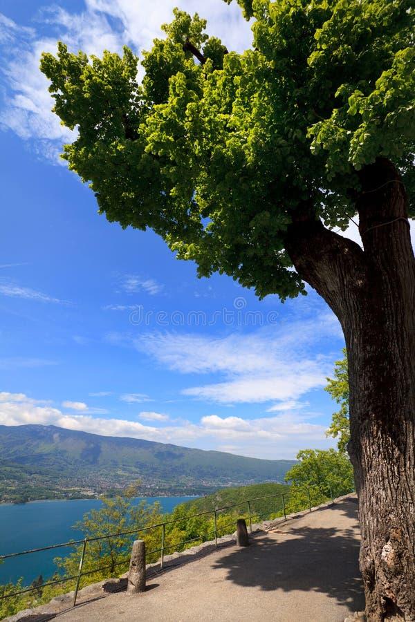 Árbol en un fondo del lago Annecy fotos de archivo