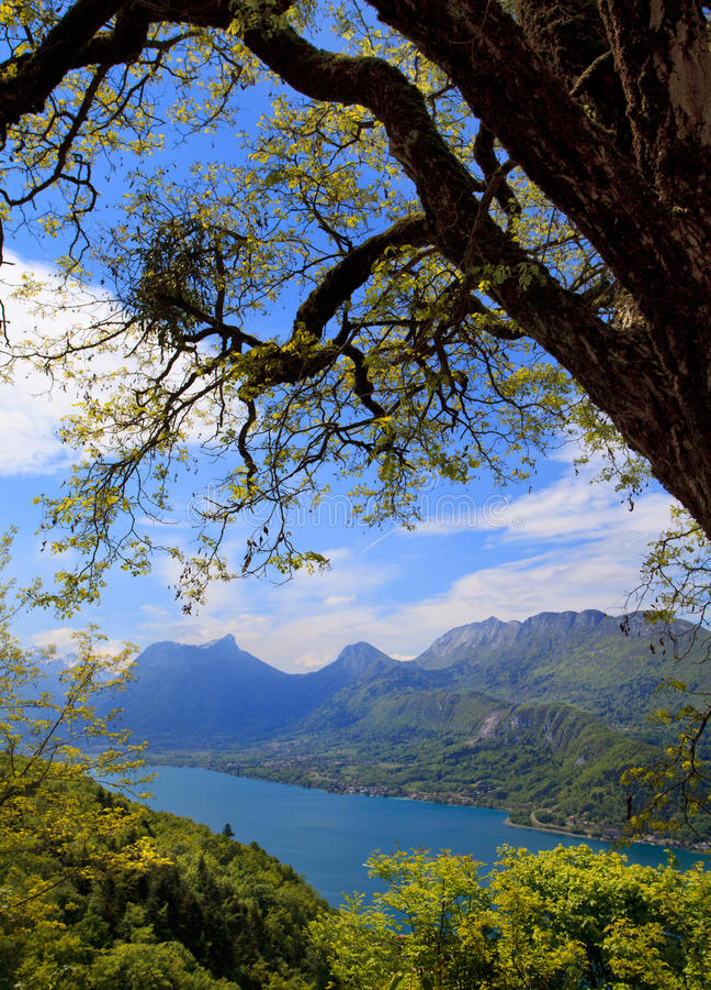 Árbol en un fondo del lago Annecy imagenes de archivo