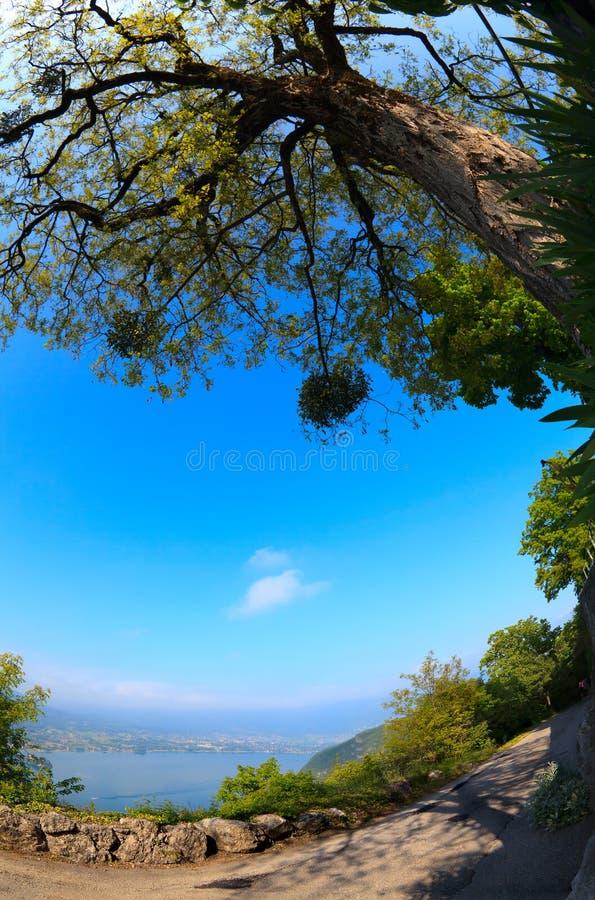 Árbol en un fondo del lago Annecy imagen de archivo libre de regalías