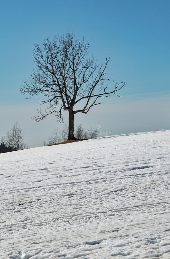 Árbol en un prado nevoso fotos de archivo