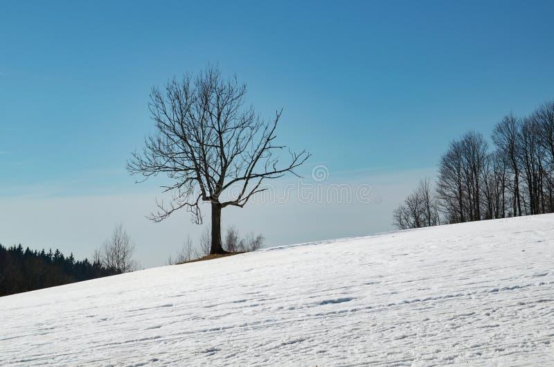 Árbol en un prado nevoso imagen de archivo libre de regalías