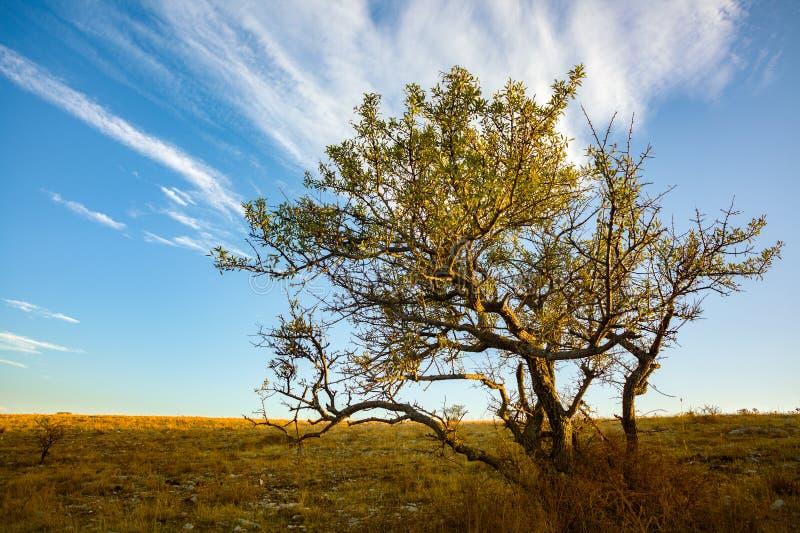Árbol en una colina fotos de archivo