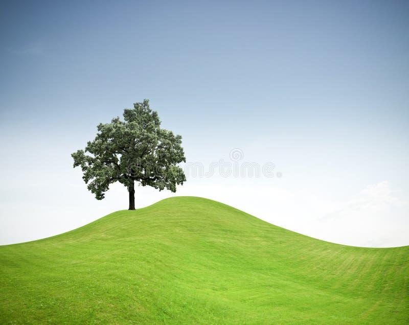 Árbol en una colina de la hierba verde   fotos de archivo