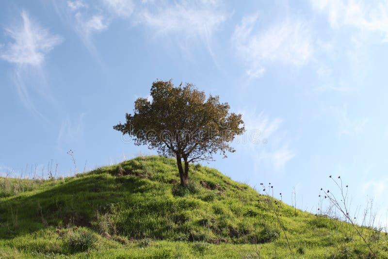 Árbol en una colina verde imagenes de archivo
