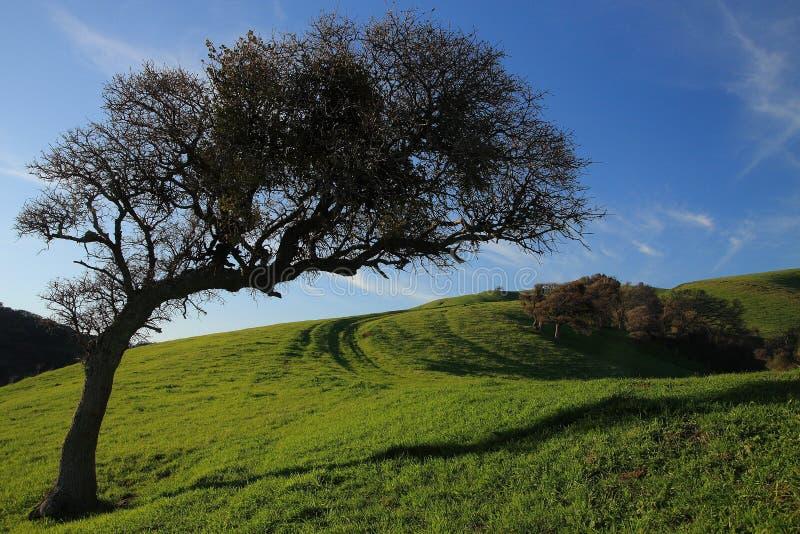 Árbol en una ladera   imagen de archivo