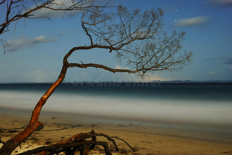 Árbol en una playa imágenes de archivo libres de regalías