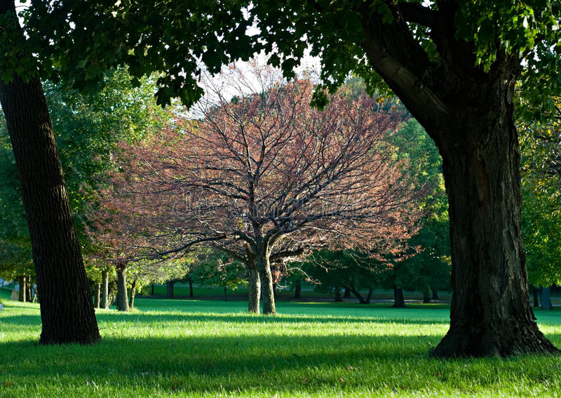 Árbol enmarcado foto de archivo. Imagen de sombras, sunlight - 11235288