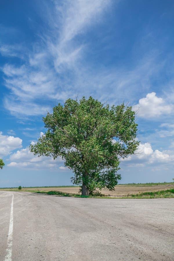 Árbol enorme en los cruces foto de archivo libre de regalías
