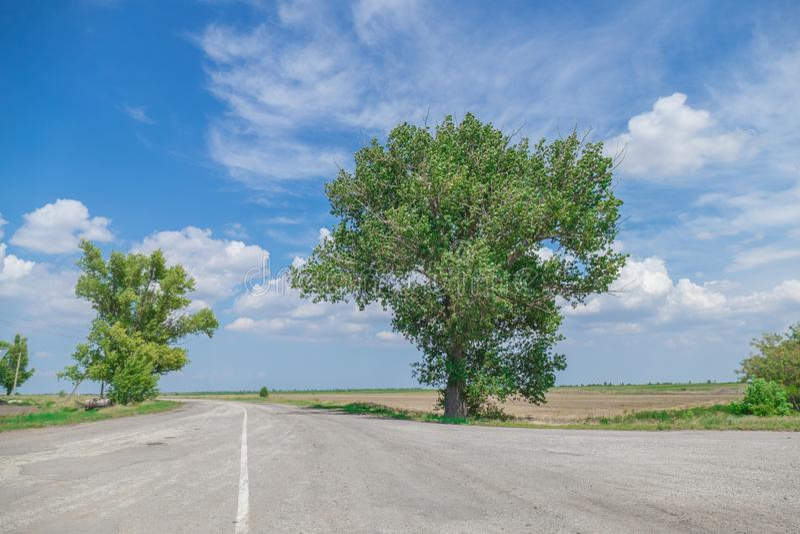 Árbol enorme en los cruces fotos de archivo libres de regalías